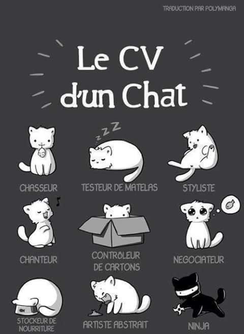 Le Cv D'uN cHaT ^^