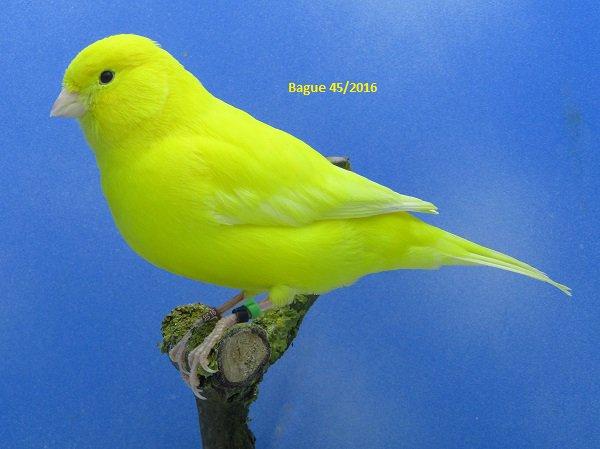Male jaune intensif en préparation