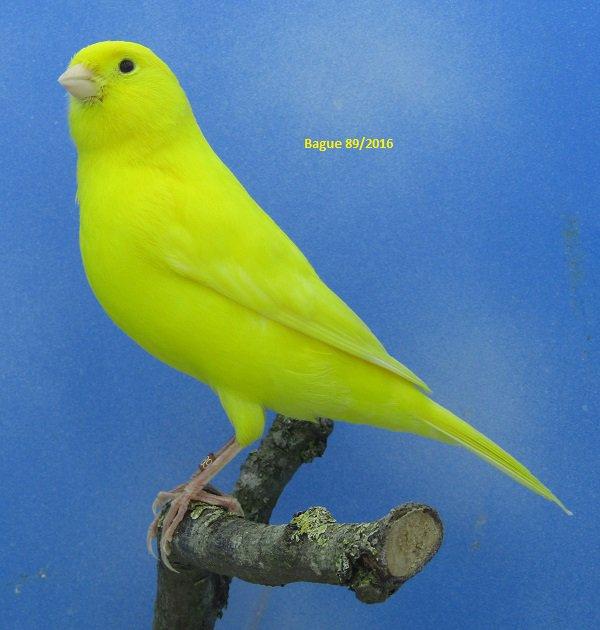 Male jaune intensif Suite