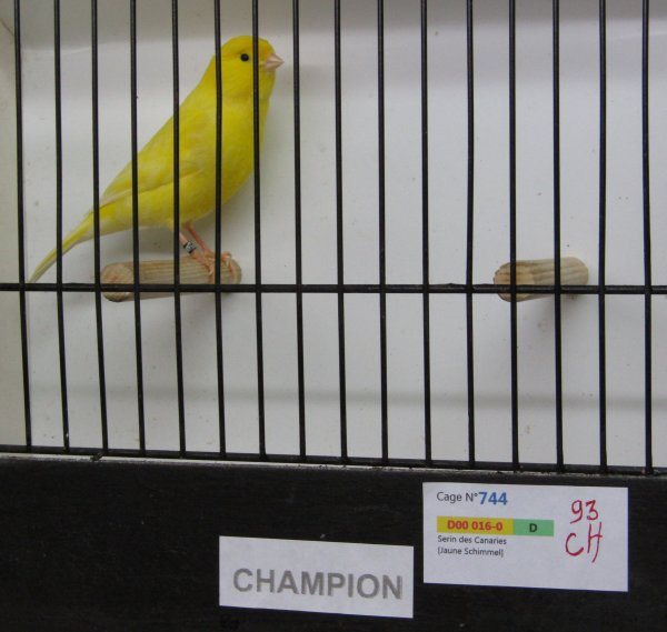 Premier concours de la saison Robecq