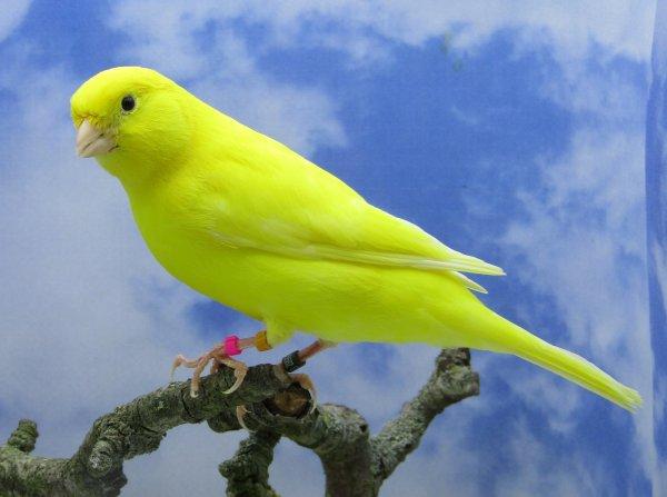 male jaune intensif 2020
