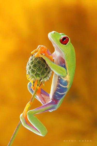 ma philosophie : L'allégorie de la grenouille.