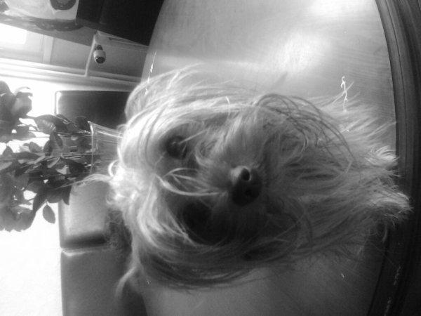 Qu'il est beau mon ptit chien