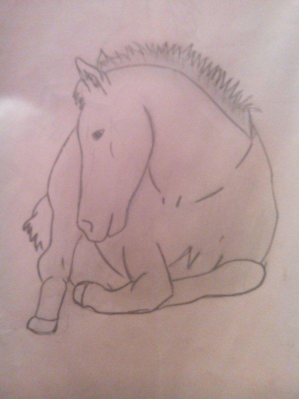 cheval coucher