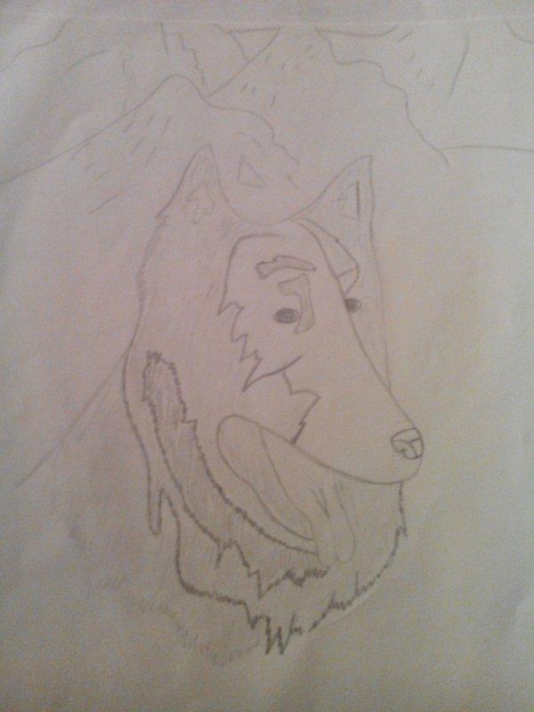 chien des montagnes