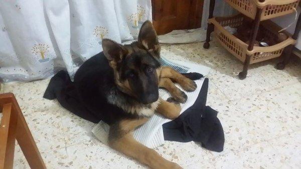 Gill a l'age de 3 mois