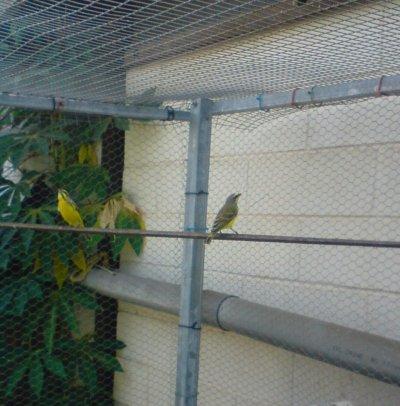 BIenvenue a tous sur mon blog consacré aux oiseaux exotiques....Bonne visite a tous!! et n'hésitez pas à laisser vos com's.