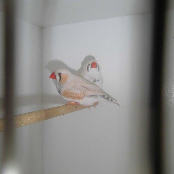 Couple 4