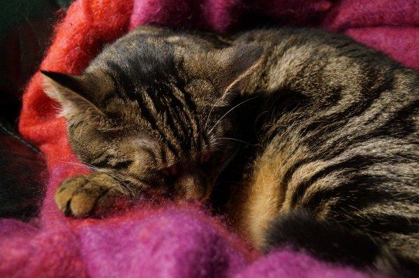 Dormir et prendre la pose quand Môman prend la photo =)