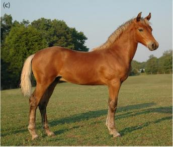 photo cheval marron clair