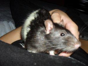 _ Rat-0ns.Skyblog.Com