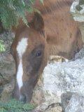 Photo de love-horses-52