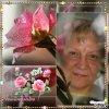 Avec un peu de retard! J'avais oublié ma bonne amie VIVI! J'espère que mon cadeau te plaira et que cette rose t'apportera la douceur et la joie dans ton coeur! bisous! Ginette!