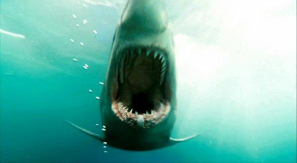 Bande-annonce de : Shark Night 3D et Bait 3D