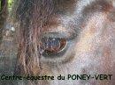 Photo de Le-Poney-Vert-974