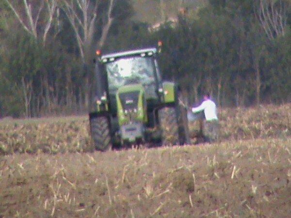 labour de maïs