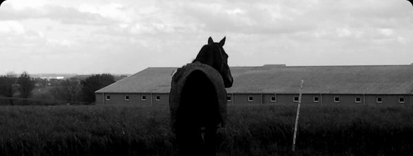 « Étrange que sa puisse paraître, un être aussi sauvage que le cheval peut être celui qui vous sauve. »