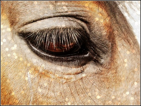"""""""Le jour où l'on comprendra qu'une pensée sans langage existe chez les animaux, nous mourrons de honte."""""""