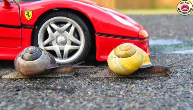 ferarie vs escargot
