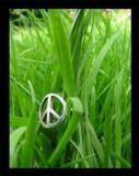 Photo de system-shuga