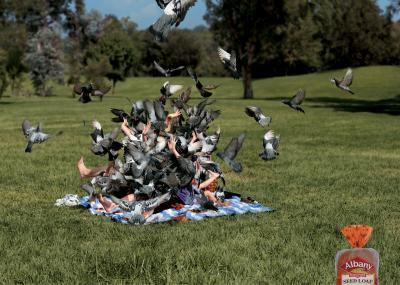 L'attaque des Pigeons!!