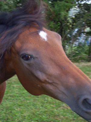 photo cheval film tais toi