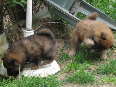 Geika digère en jouant dans le jardin avec son fréro puis c'est le moment des au revoir snif snif à dans 1mois Geika