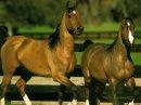 Photo de xles-chevaux-ma-passionx