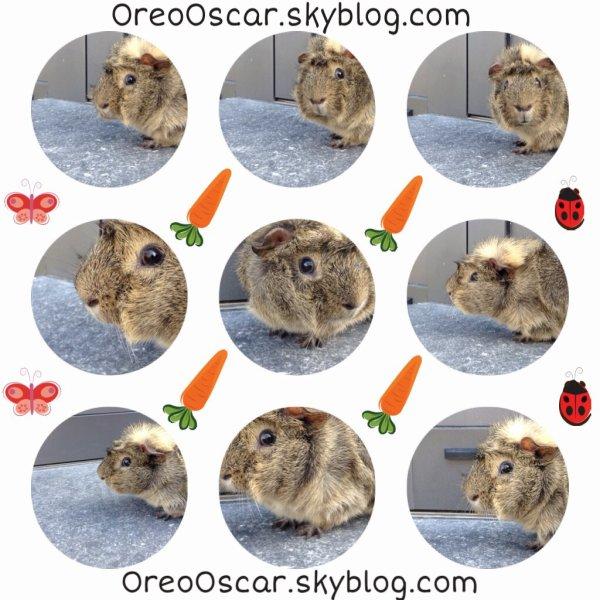 Oscar qui joue les stars ♥️