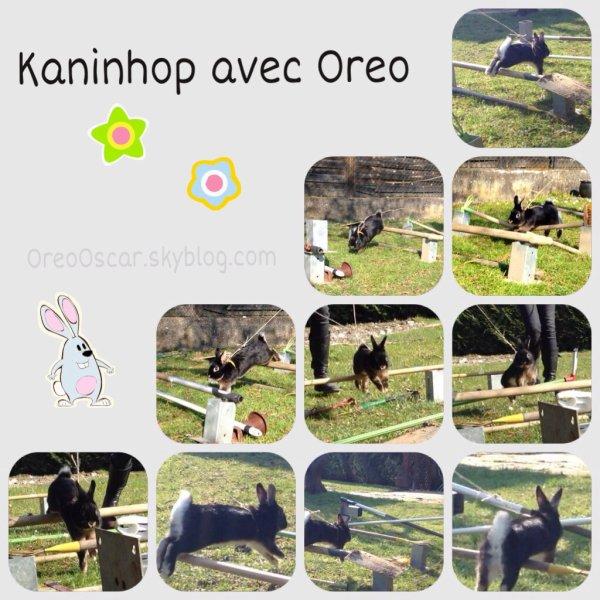 Kaninhop avec Oreo ♥️