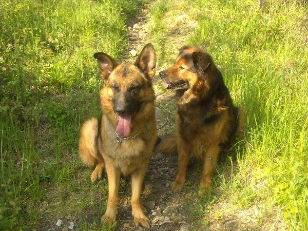 Et voici nos bébés d'amour, enfin réunis pour la promenade !!!