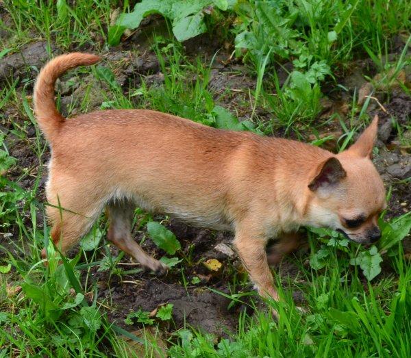 Hixia ( fille de Esther et Bambi)