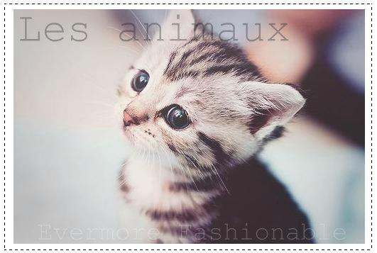 De tous les animaux qui s'élèvent dans l'air, Qui marchent sur la terre, ou nagent dans la mer, De Paris au Pérou, du Japon jusqu'à Rome, chaque animal à son histoire ♥.[George Bernard Shaw]