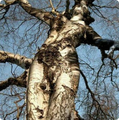 photos d'arbre sexy, ou la nature est bien faite