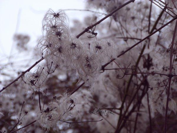 Fleur dont le nom m'est inconnu :)