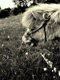 Photo de didy-09