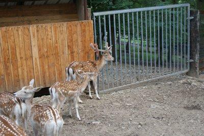 promenade a la crete des cerfs avec des amis......................