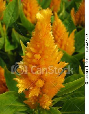C losie plumeuse la nature for Plante plumeau rouge
