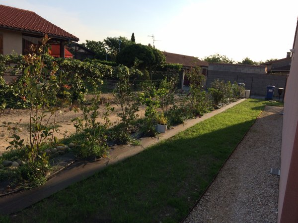Mercredi 14 Juin 2017 mon jardin le gazon a poussé