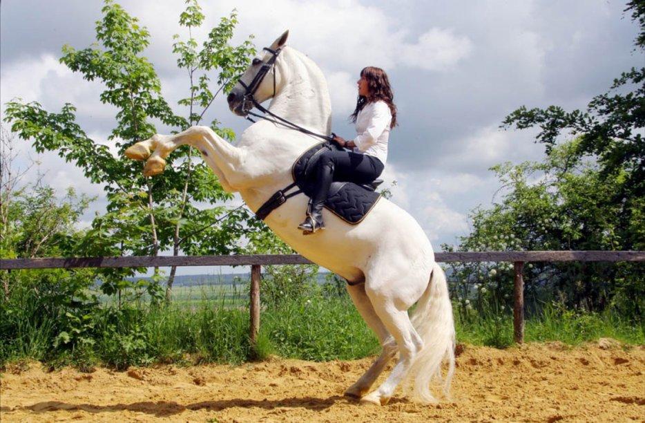 Truc et Astuces pour les chevaux.