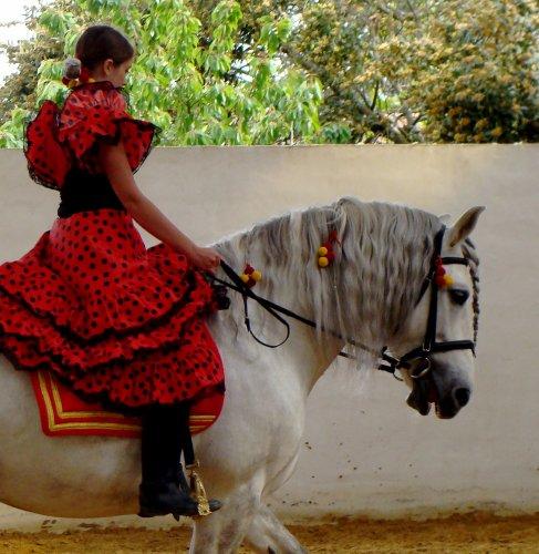 Fulano Pur race espagnol de mOn cOeur