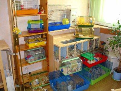 immeuble de cages hamsters et rongeurs. Black Bedroom Furniture Sets. Home Design Ideas