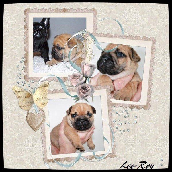 Notre petits Trio d'amour !