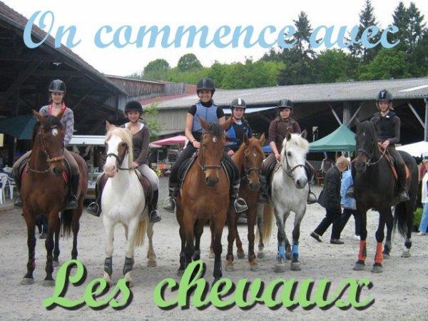 On commence avec les chevaux ! ♥