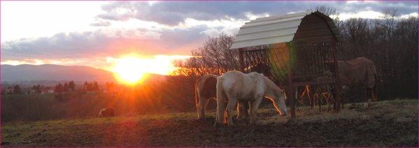 Ils rendent le coucher de soleil juste magnifique