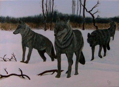Meute de loups - 132