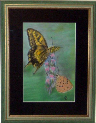 Papillon Aurelie - 83