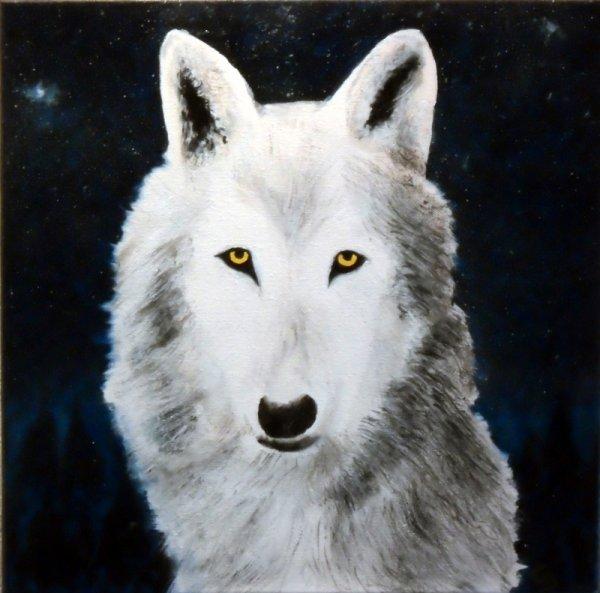242 - Loup blanc