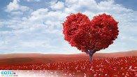 un amour blessez
