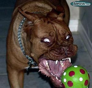 Mechant qui fait peur que du chien for Miroir qui fait peur
